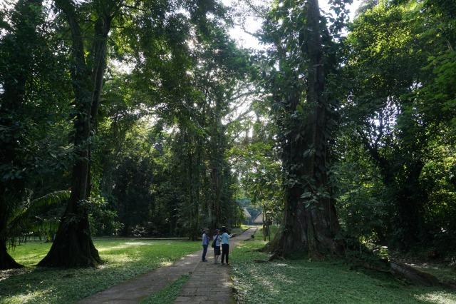 キリグア観光① 世界遺産のマヤ遺跡 キリグア遺跡