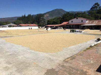 アンティグアから行けるおすすめ日帰り観光ツアー(コーヒー農園)