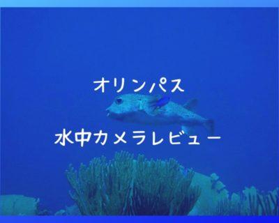 水中カメラレビュー オリンパスはダイビングにも使えておすすめ!