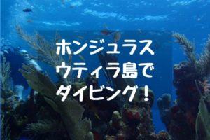 ホンジュラス・ウティラ島でダイビング!行き方・おすすめショップ