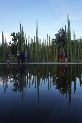 オアハカ観光 エトノボタニコ・デ・オアハカ庭園
