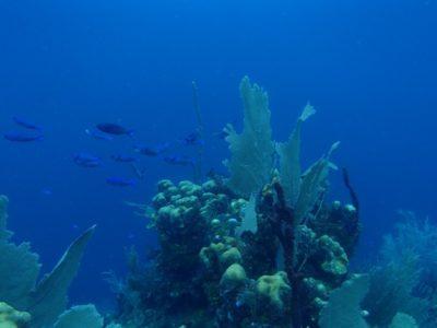 ホンジュラス屈指のリゾート ウティラ島でのダイビング感想