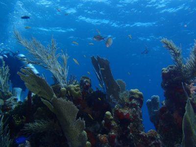 オリンパスの水中カメラTG-820で撮った写真